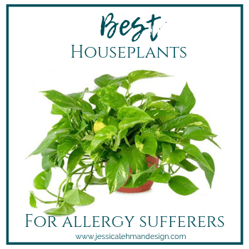 Houseplants that purify the air.