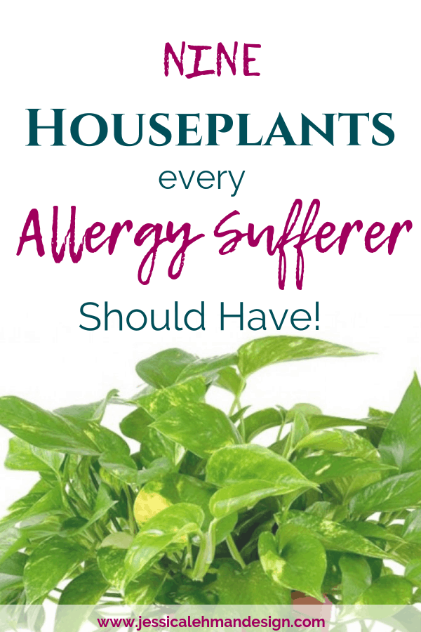 Indoor plants that are great for allergies